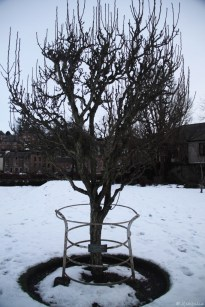 This tree was planted in honour of the Queen's Coronation in the 50s. I thought it would be bigger by now.
