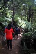 Palmenwaldkarawane