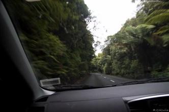 im Regenwald!