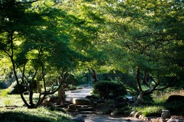 Inside the Japanese garden