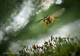 about-wasp-600