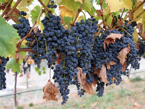 wine_ukraine