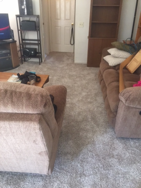 New carpet for happy clients!!!