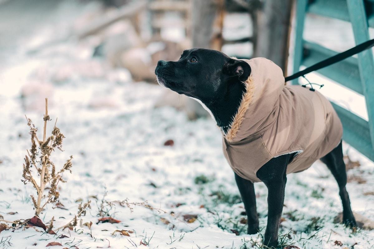Jesienno–zimowe spacery z psem – czyli rozpraw się z wymówkami raz na zawsze i wyskakuj z kapci :)