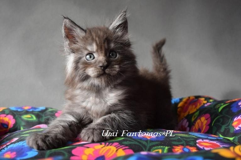 Wyprawka dla kociaka + checklista do pobrania