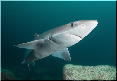 photo of a shark-katran