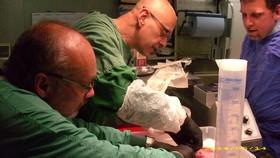 Kryonik Biostase Biostasis