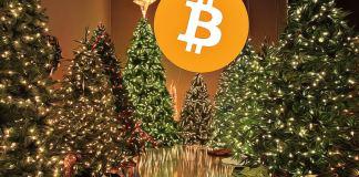 kryptomeny na vianoce pod stromčekom