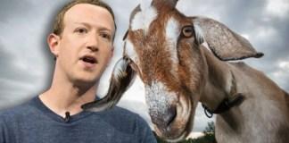 zuckerberg goats