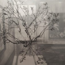 """The Window, or Battle and Kinship, 2016, Charcoal and Graphite on paper and drafting film, 17x14"""", Krystal Booth"""