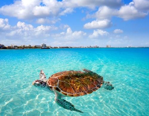 Krystal International Vacation Club Shares a Trip To Cancun 2