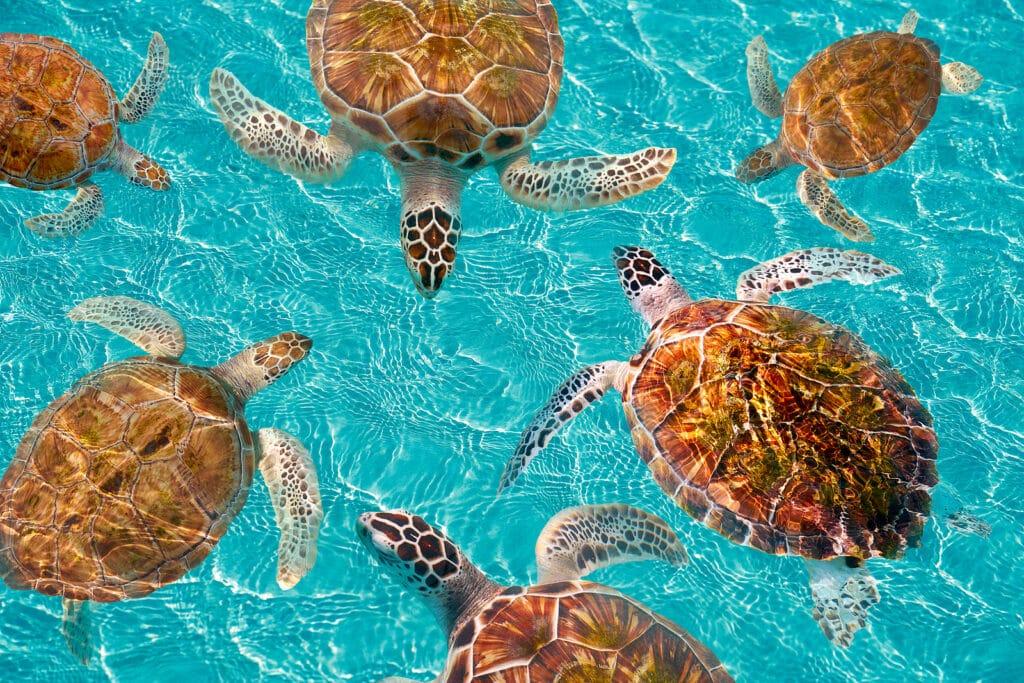 Riviera Maya turtles