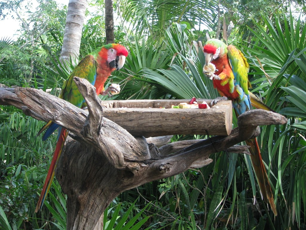 Mexican birds eating in Riviera Maya Xel ha provided by Krystal International Vacation Club