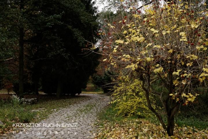 2015-10-30_zamek_na_wodzie (1 von 1)