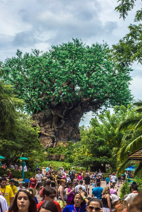 Animal Kingdom – Disney World