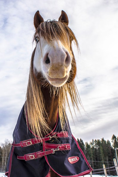 horse with silver eyes