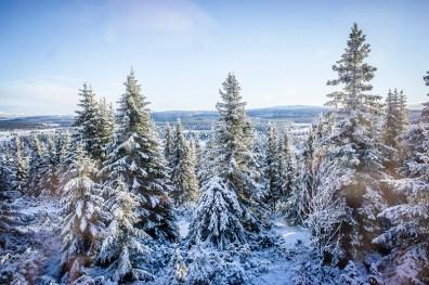 all those christmas trees!