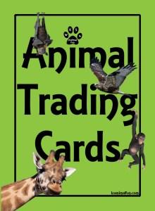 front-animals