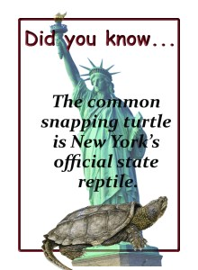 snapping-turtle-fact