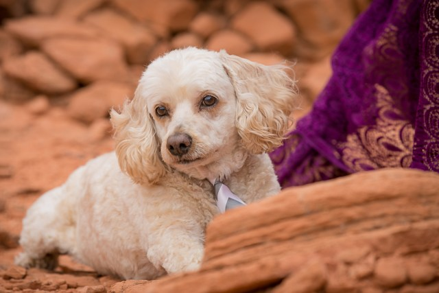 Dog photography session at valley of fire
