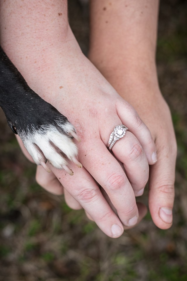 paws and hands. Murfreesboro pet photography
