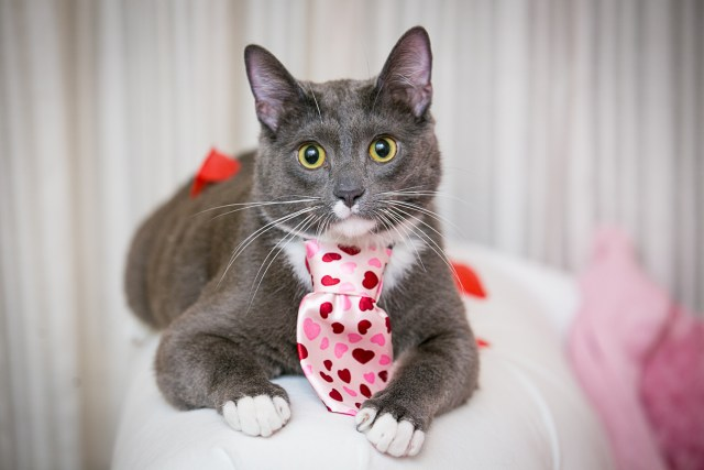 my cat Leroy shelter cat valentines day kitty
