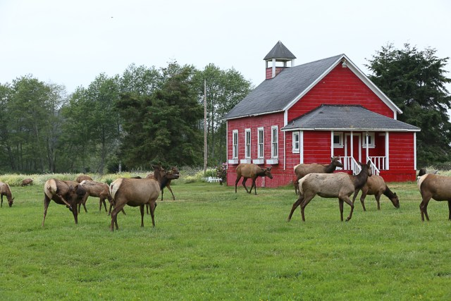 Elk in front of red barn