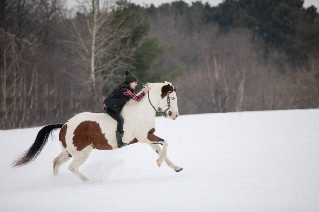 snow cover field, riding horse equestrian photography