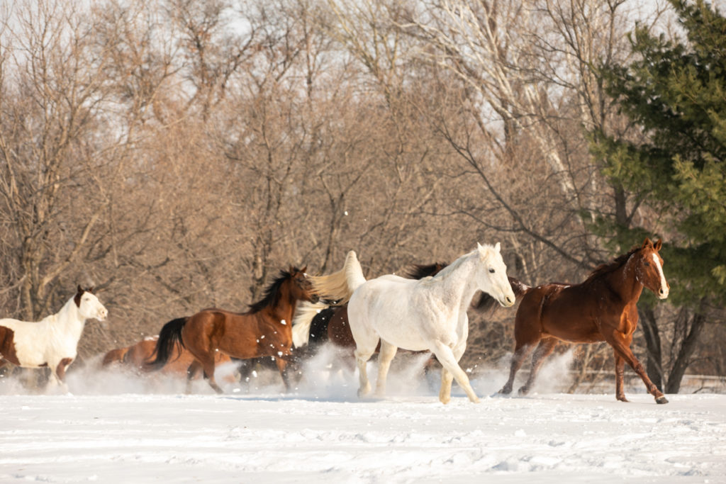 horse photography in the snow