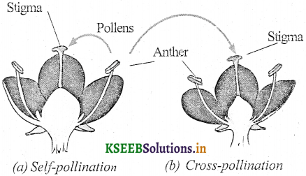 KSEEB Solutions for Class 7 Science Chapter 12 Reproduction in Plants 1
