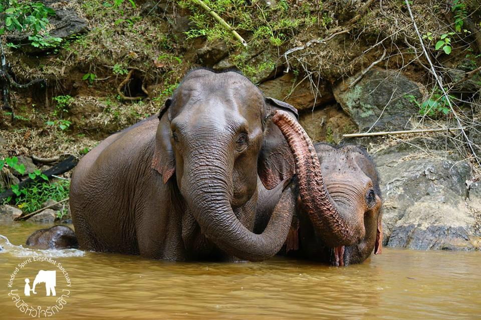 Kindred Spirit Elephant Sanctuary