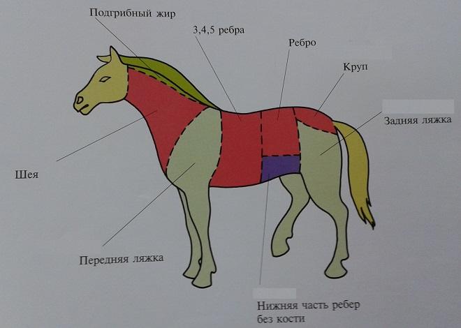 Где выращивают лошадей