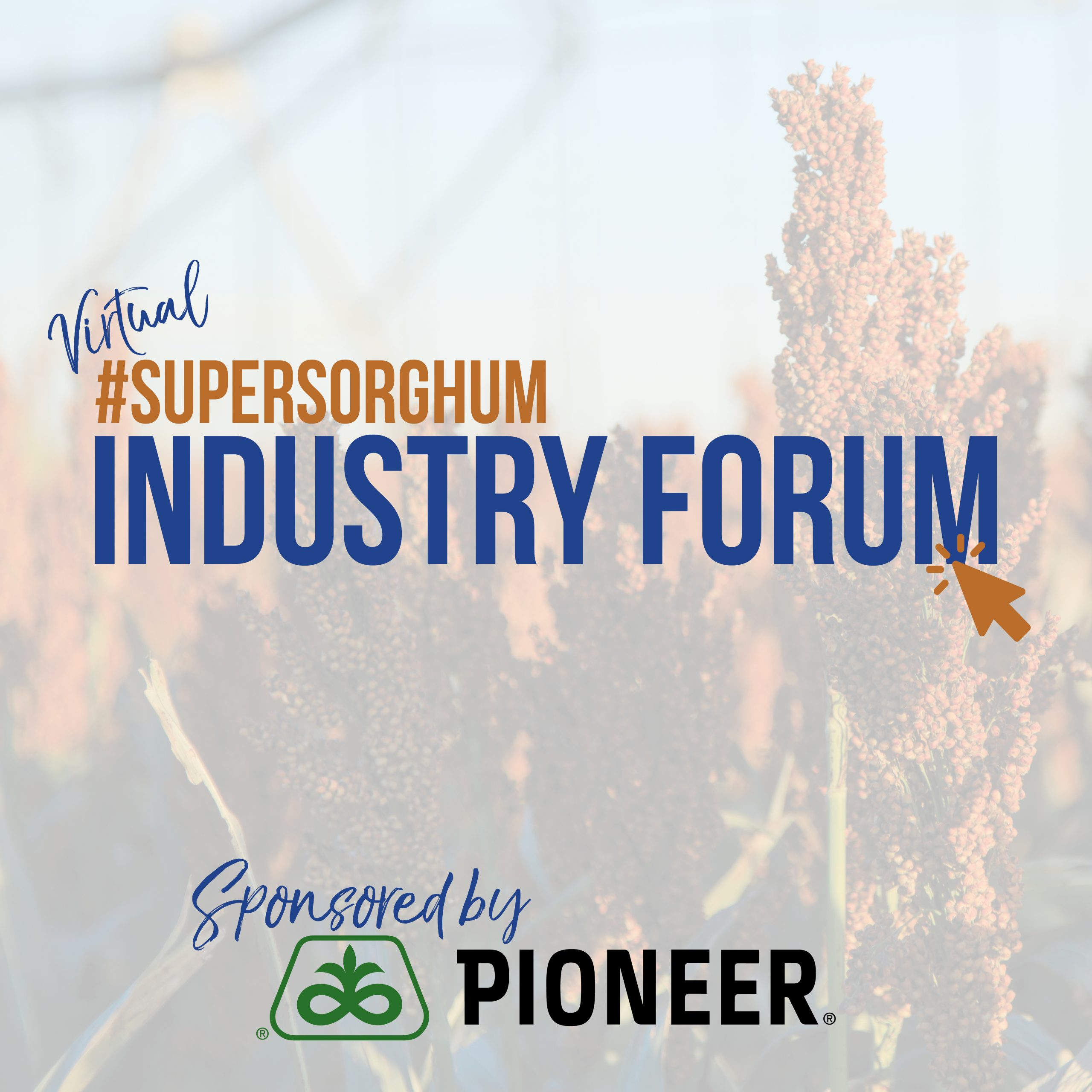 Register Today for NSP's #SuperSorghum Virtual Industry Forum