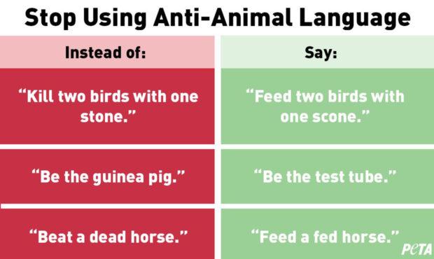 using anti animal language