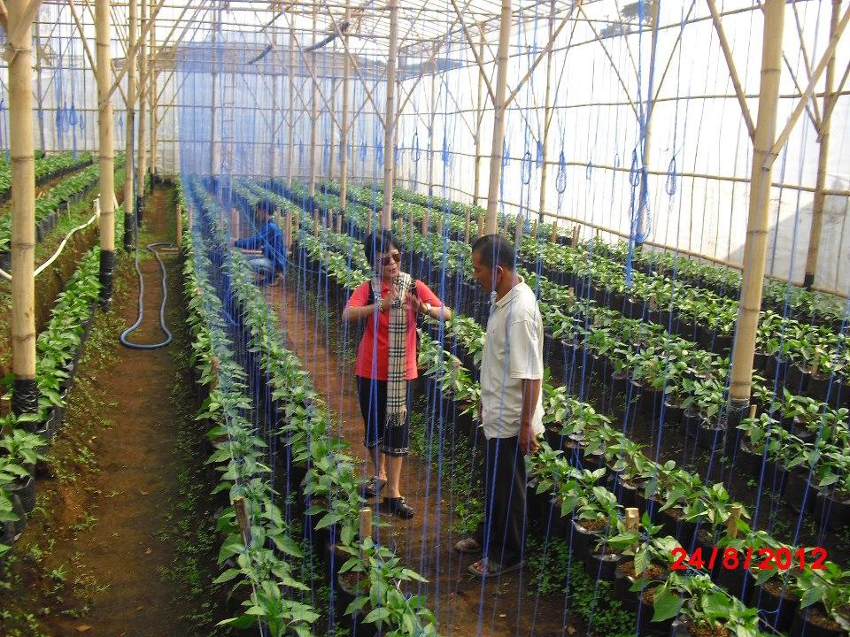 Perkebunan Sayuran