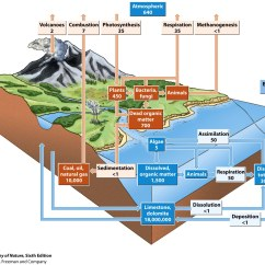 Water Ecosystem Diagram 2 Battery Boat Wiring Ecosystems Html