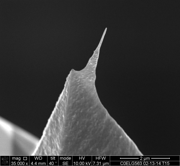 FN-1 - Carbon Nanotube AFM Probe