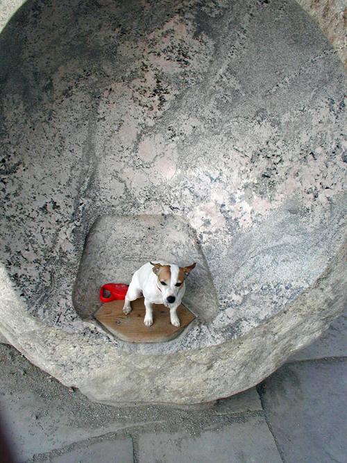 Travel Dog Blog, Colorado