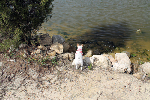 Travel Dog Blog, Cross Florida Barge Canal