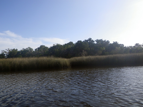 Quiet Morning on Mason Creek
