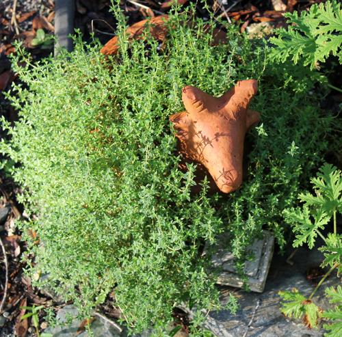 In the Garden, Thyme