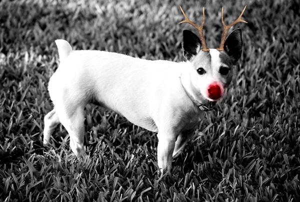 2005 Maggie Christmas Card