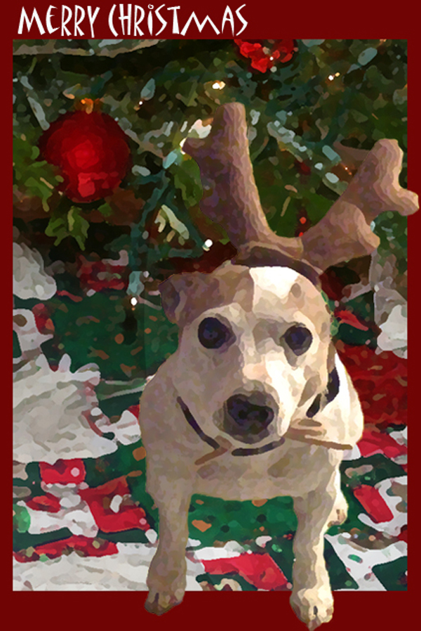2009 Maggie Christmas Card