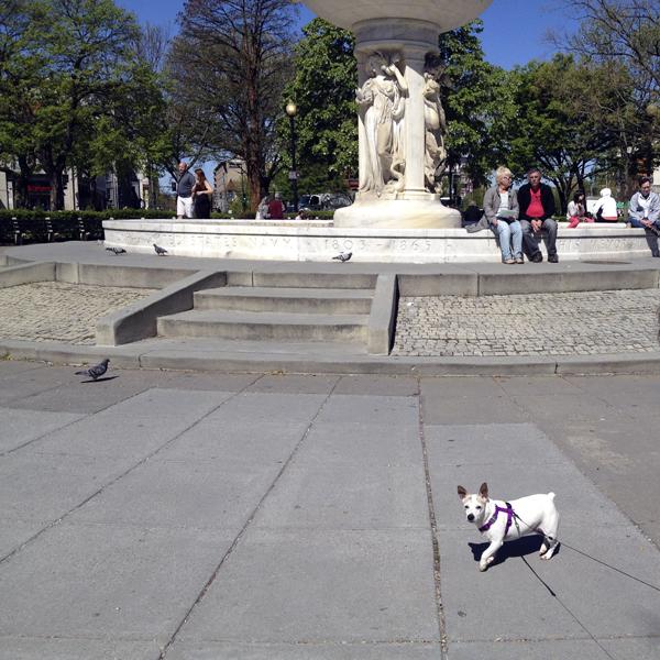 Maggie in Dupont Circle