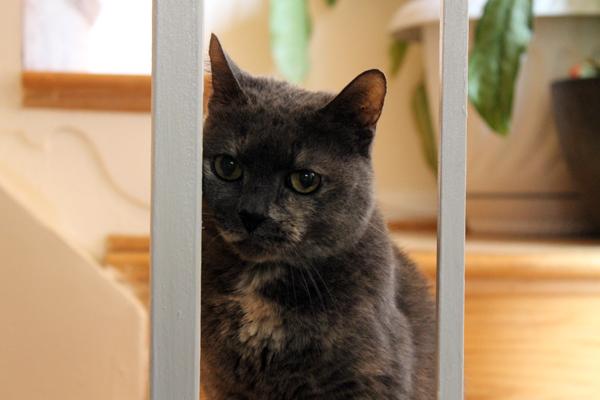 Mattie the cattie