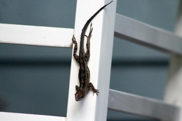 Leapin' Lizards