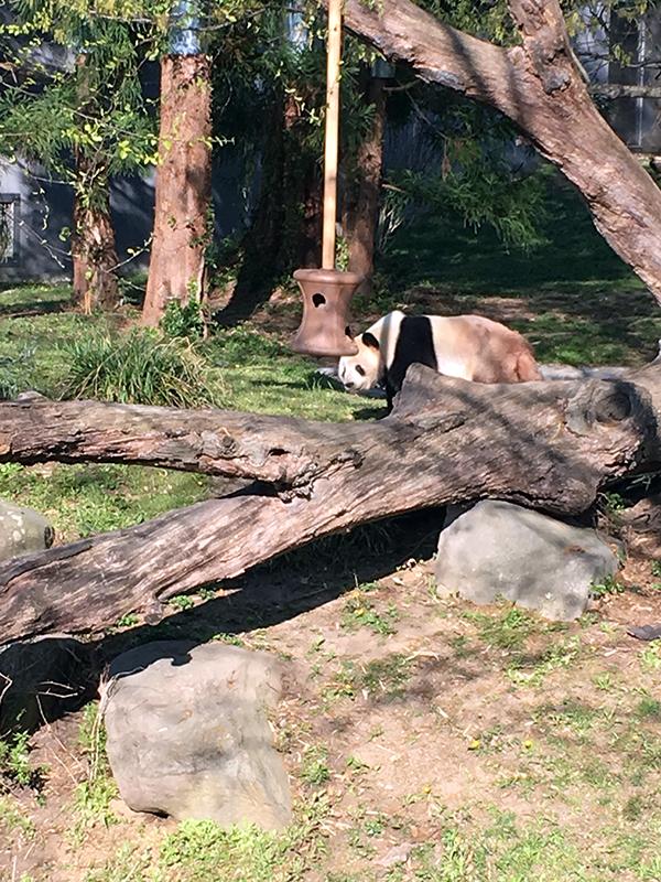 Pandas in DC