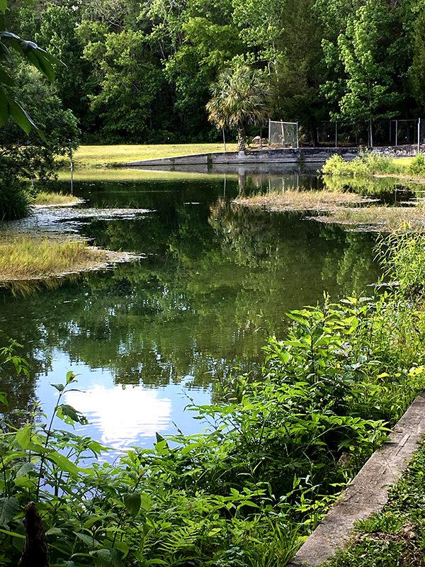 Bluebird Springs