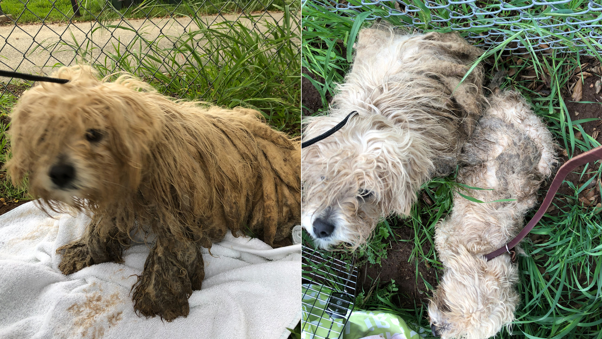 The San Diego Humane Society released these photos of the abandoned dogs.