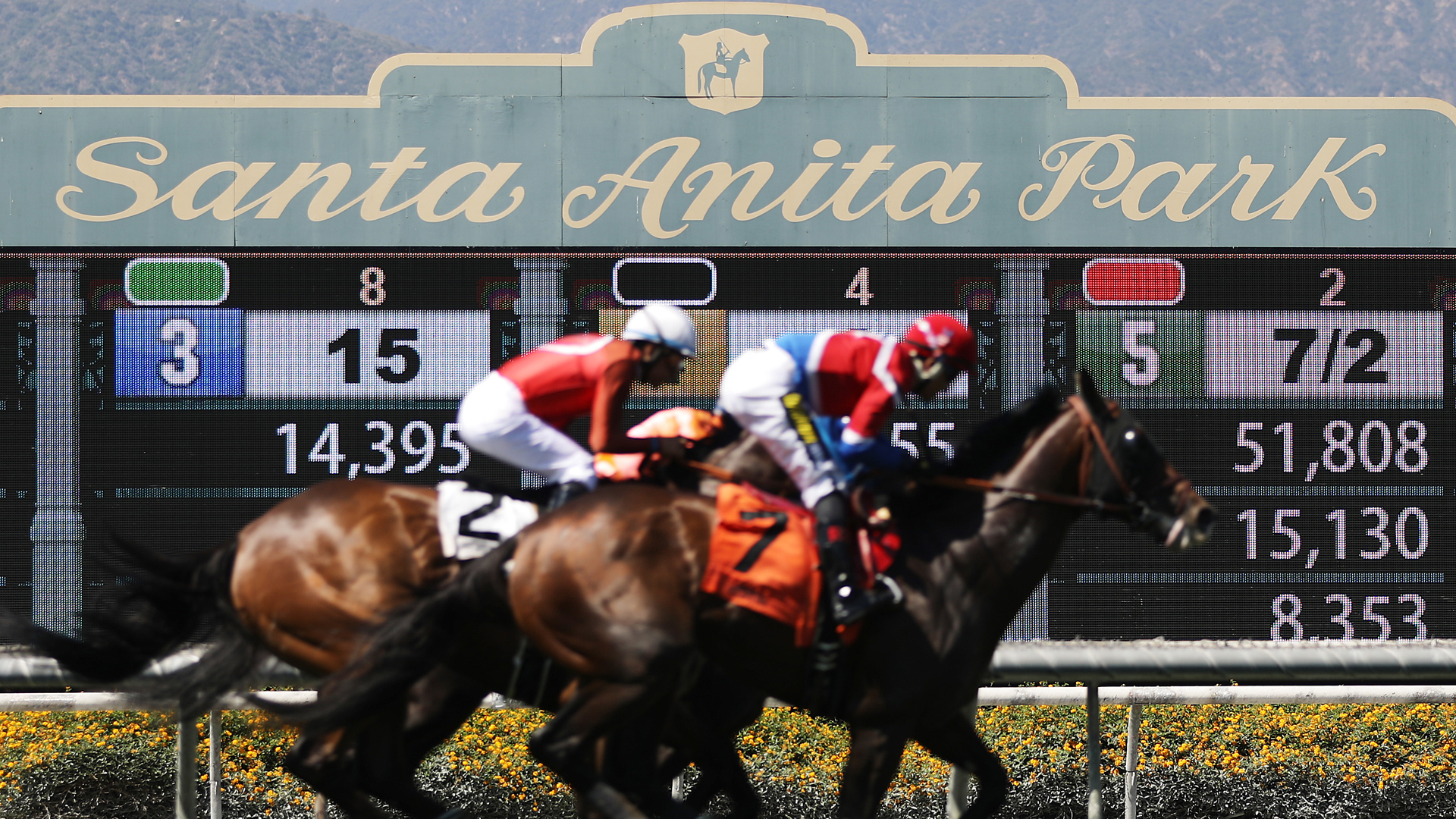 Race horses run on the final day of the winter/spring horse racing season at Santa Anita Park on June 23, 2019 in Arcadia, California. Santa Anita ownership banned a Hall of Fame trainer yesterday following the death of a fourth horse from his stable at the track. It was the 30th race horse to die at the famed racetrack since December 26. (Credit: Mario Tama/Getty Images)